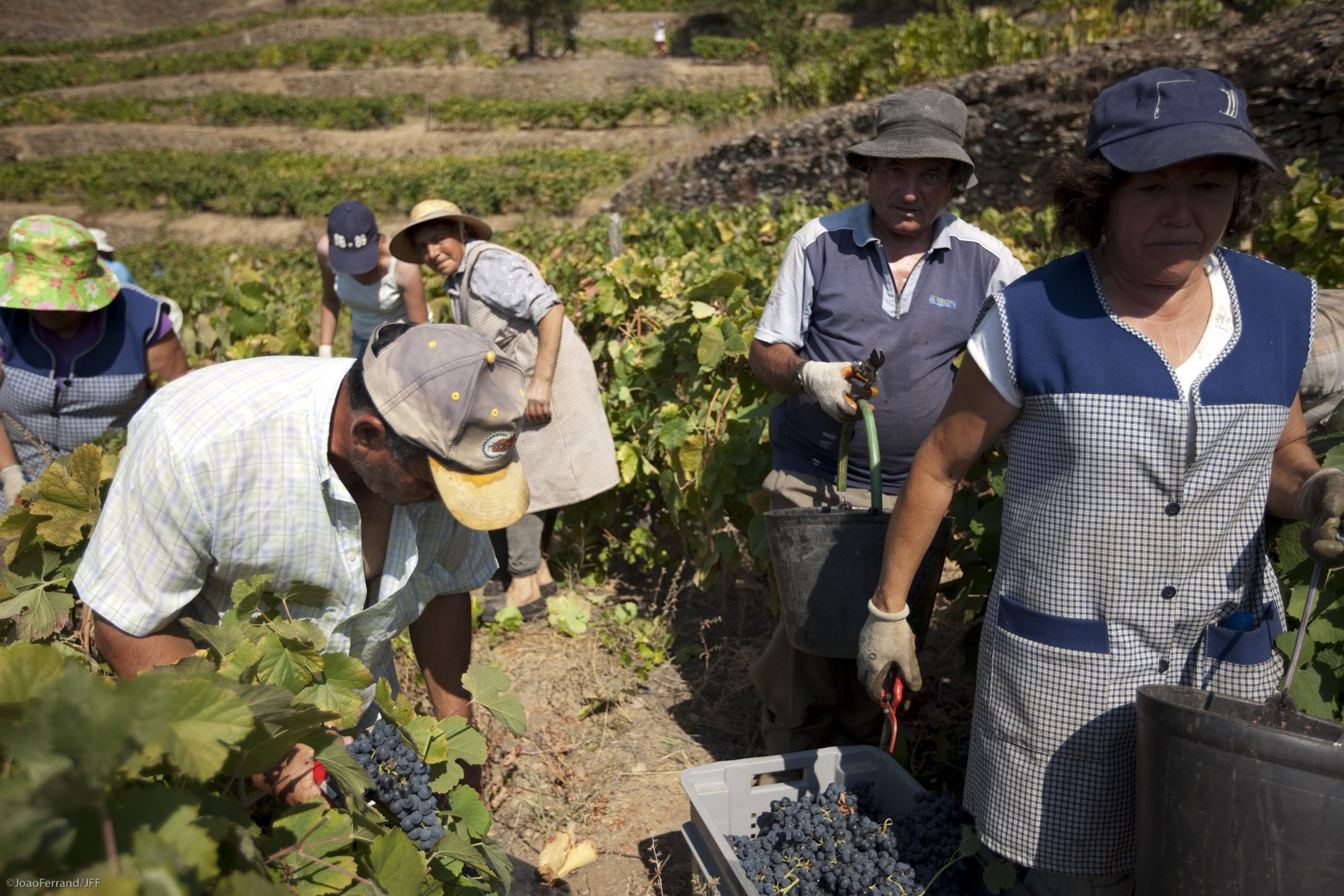 Artisanal Wines and Conversation at Quinta da Faísca in the Douro Valley on Perfect Local Day by UNCOVR Travel