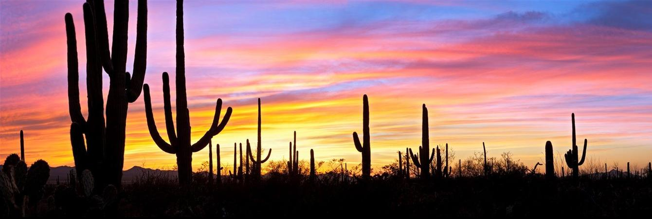 rf-nature-cactus-sunset-panoramic.jpg.1340x450_0_0_9438.jpg