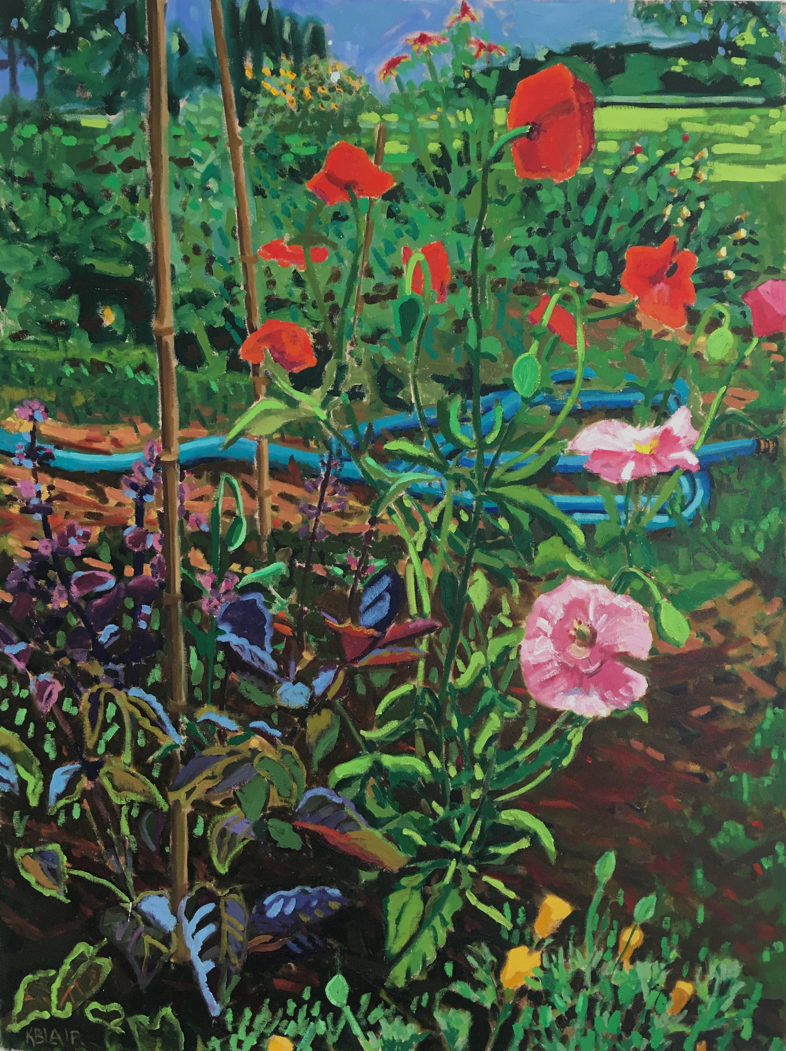 Poppies with Garden Hose, 48x36