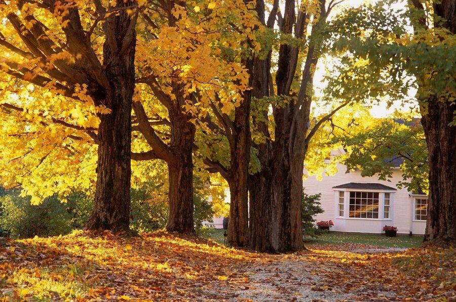 Simonton Windows & Perdue Builders wish you a Happy Autumn!