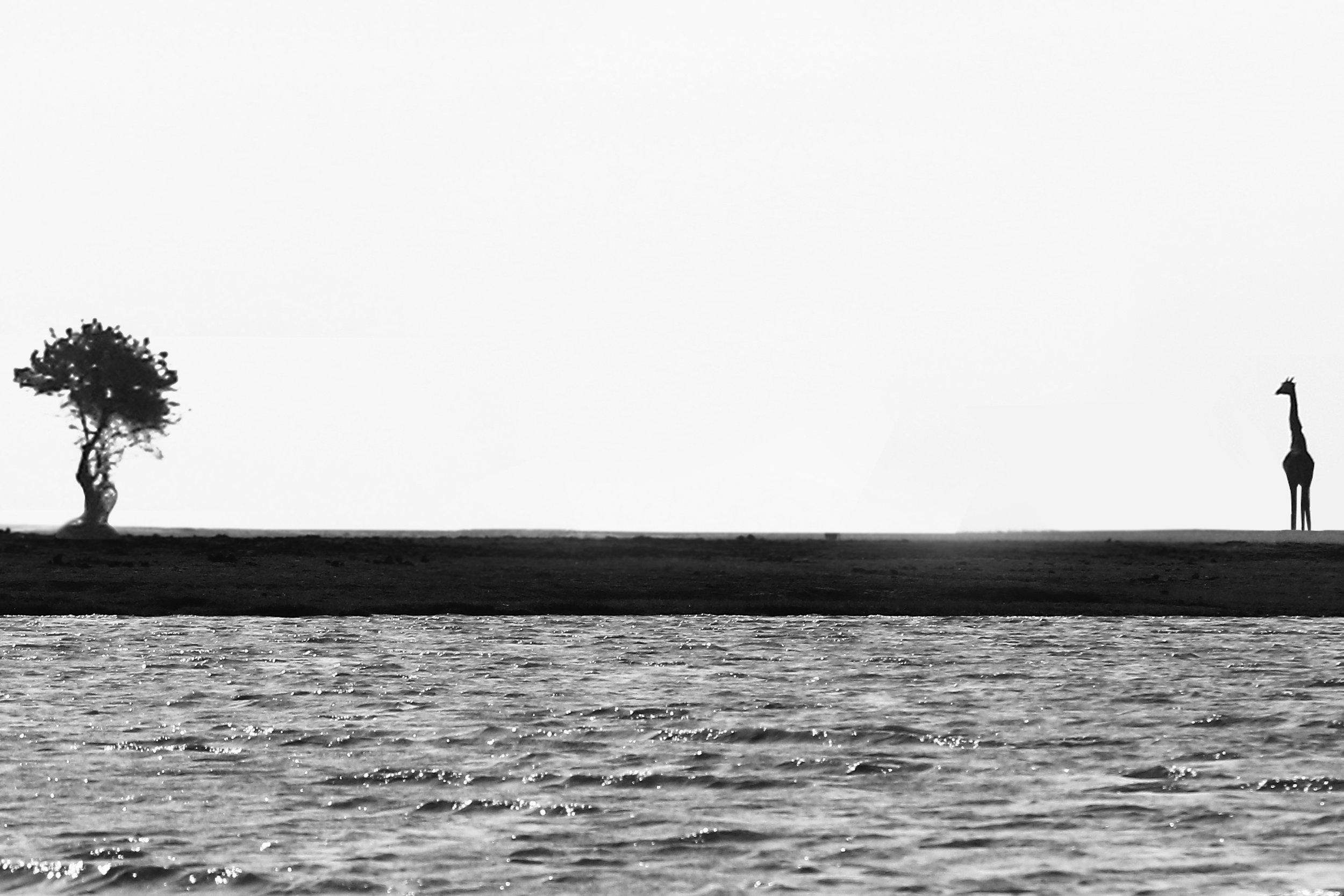 Photographed by  Jason Naudé