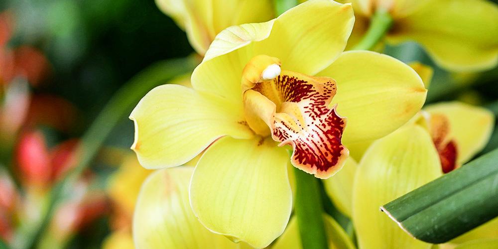 www.photopin.com_Orchid.jpg