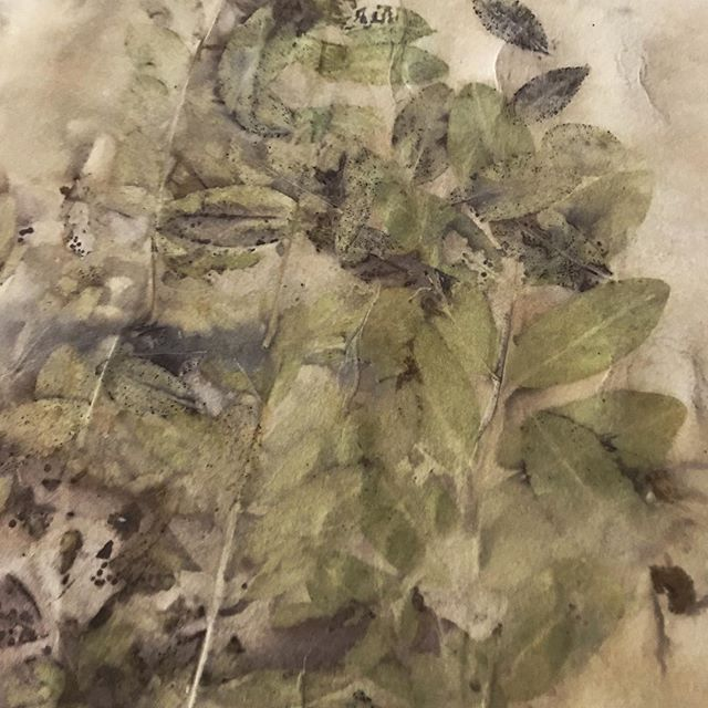 #worksonpaper #workinprogress #art #naturaldyeing #ecoprinting