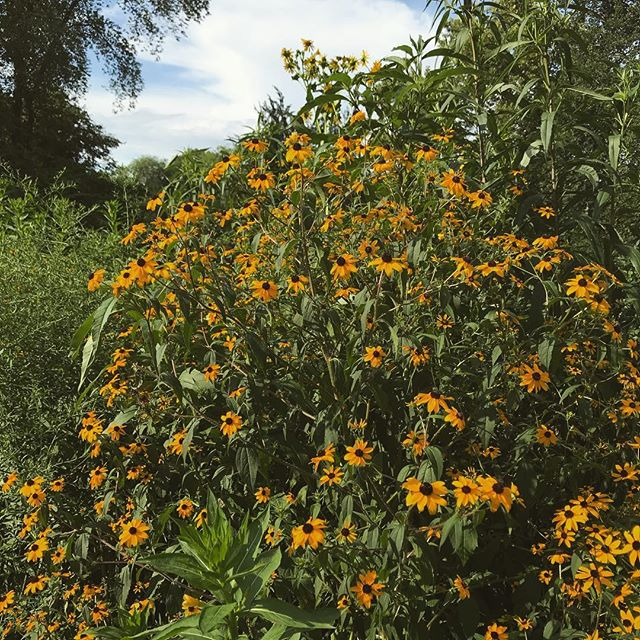 Summer's floral peak🌞🌻