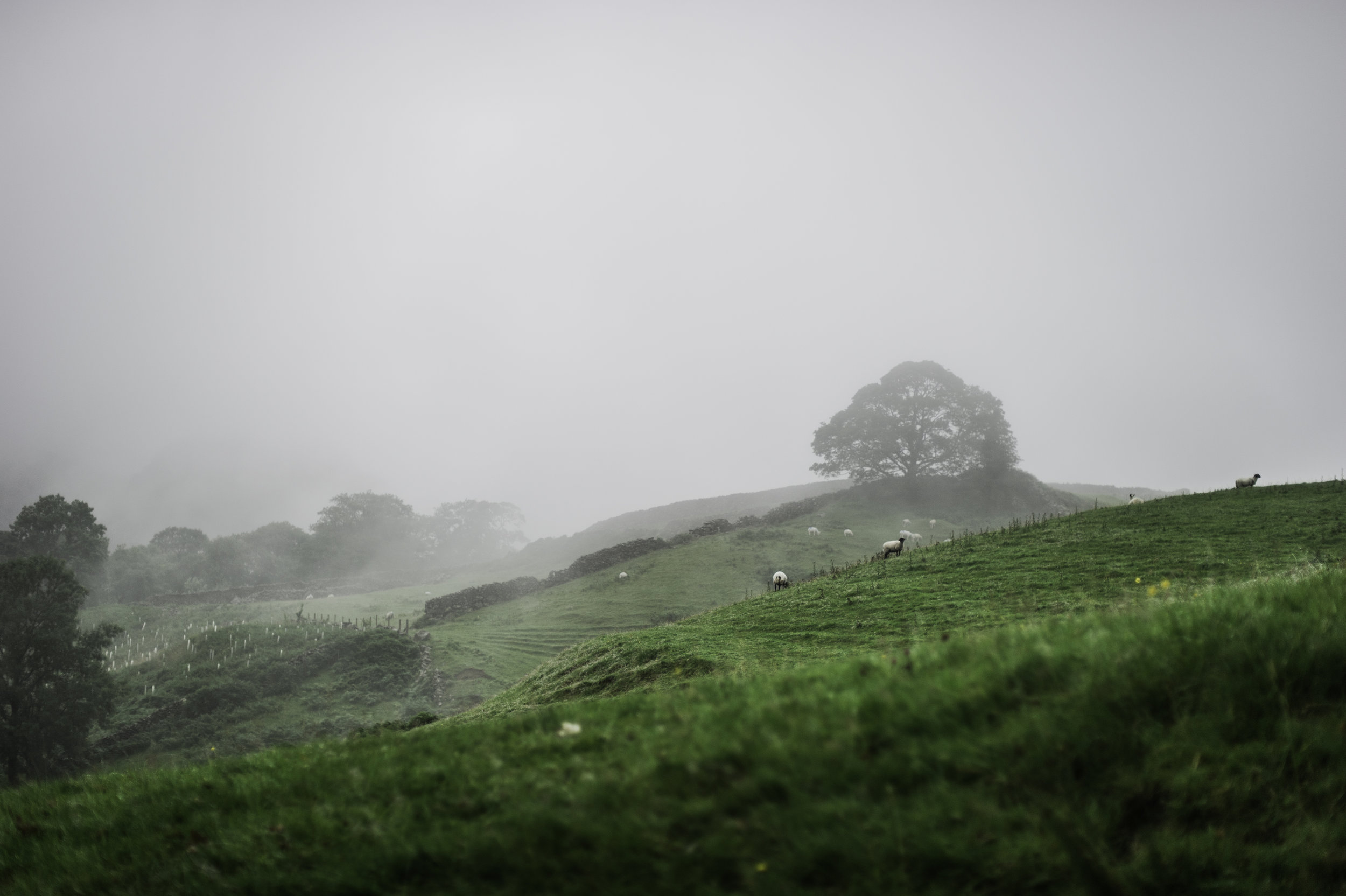 Foggy Green Pastures