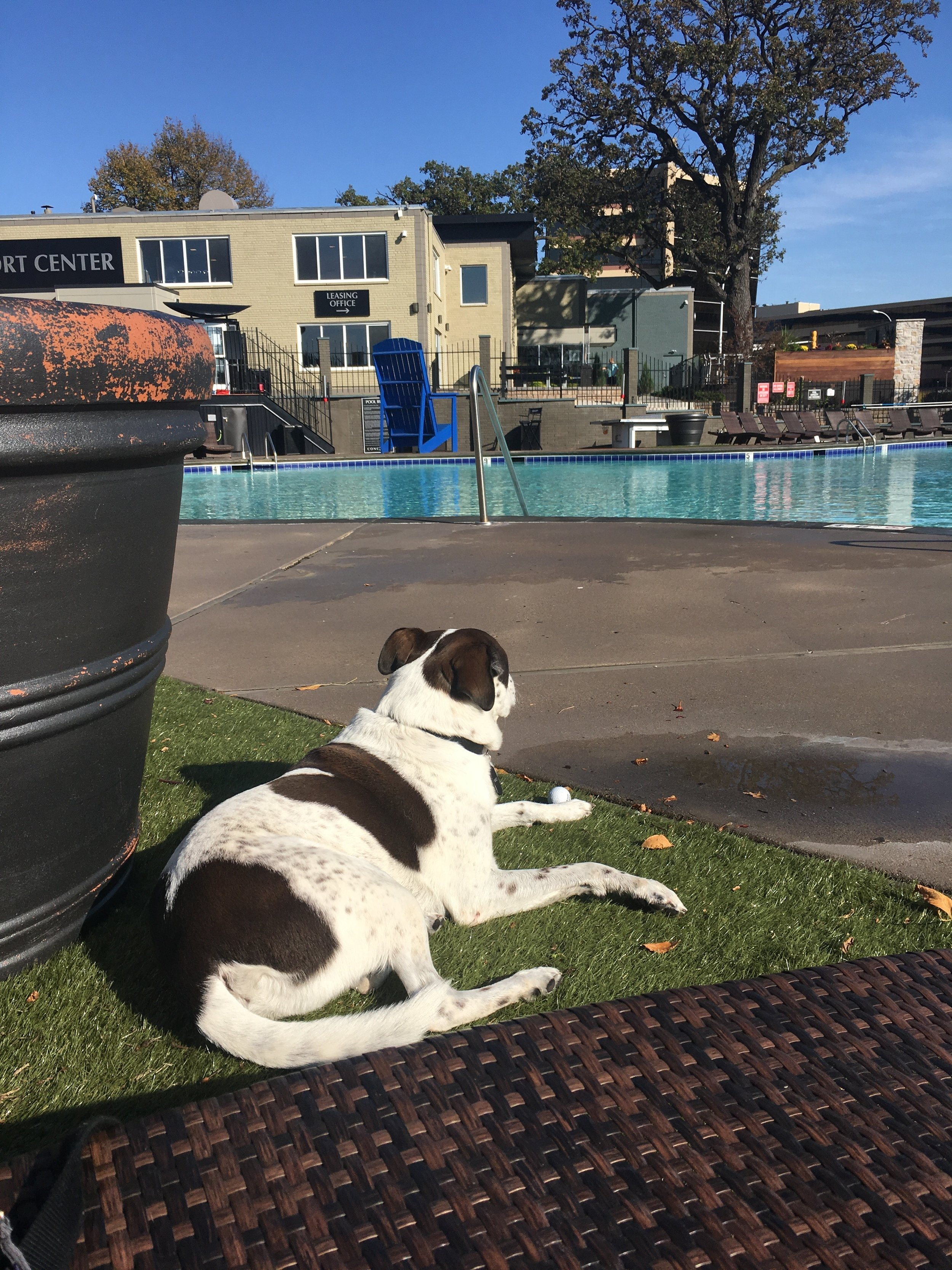 The 1 Day a Yr Dogs Allowed in the Pool Area
