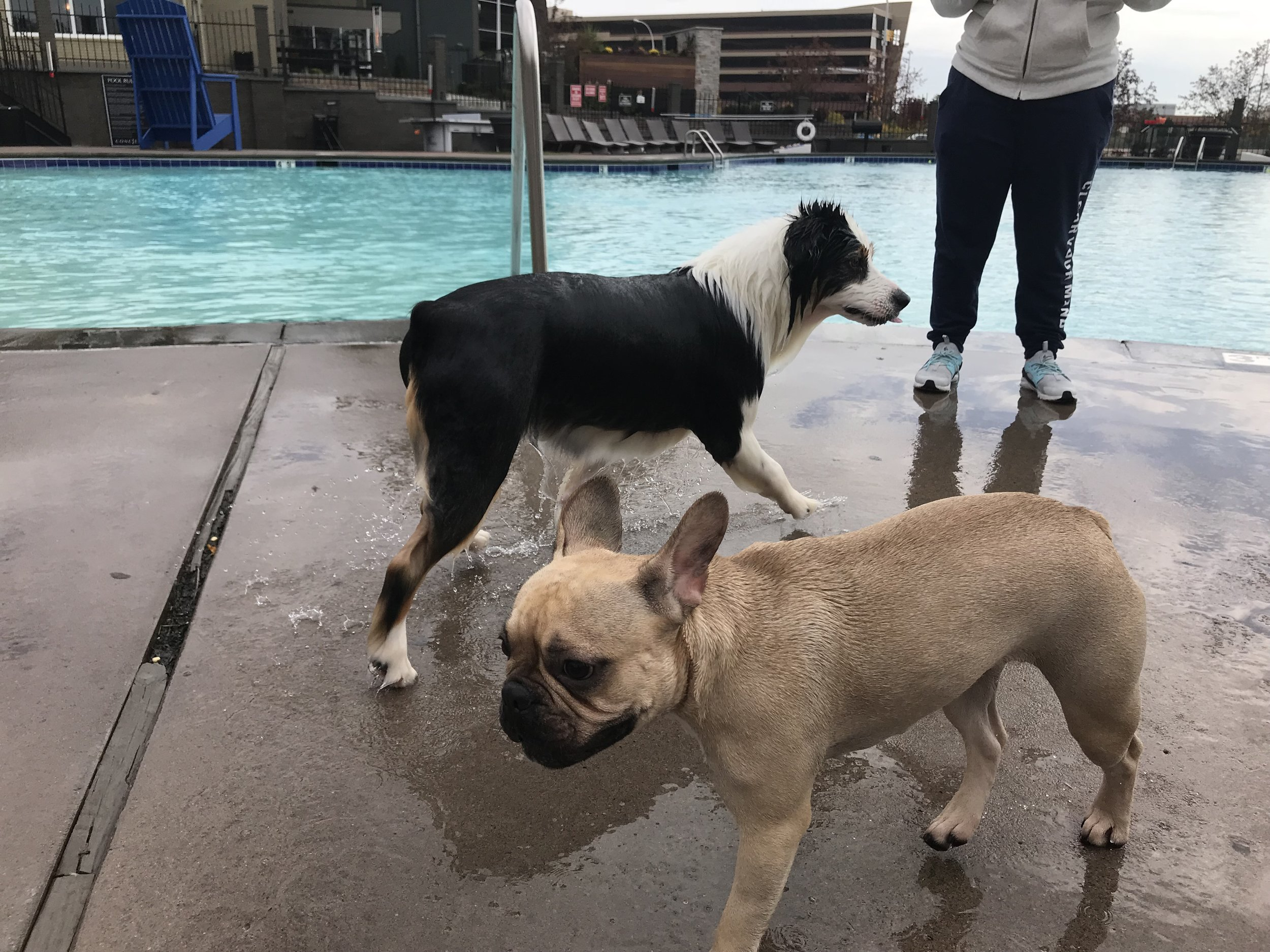 Doggie Pool Party - Post Pool Closing Day