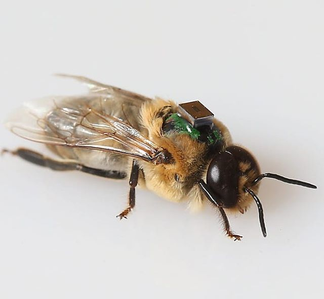 Grad student, @slates.03 is doing some cool work with sensors in the lab. Check this link for details.  https://ag.purdue.edu/digitalag/the-latest-buzz-around-digital-agriculture/  #beekeeping #purdue #rfidchip #honeybee