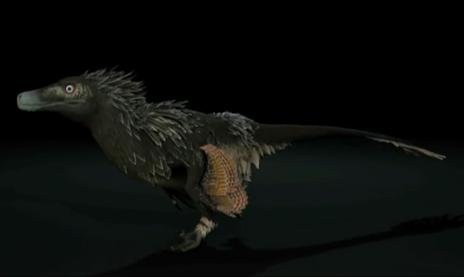 Acheroraptor-profile.png