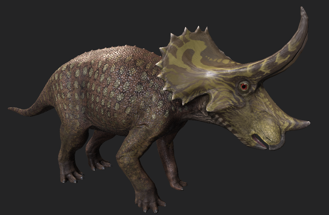 Textured juvenile  Triceratops  model.