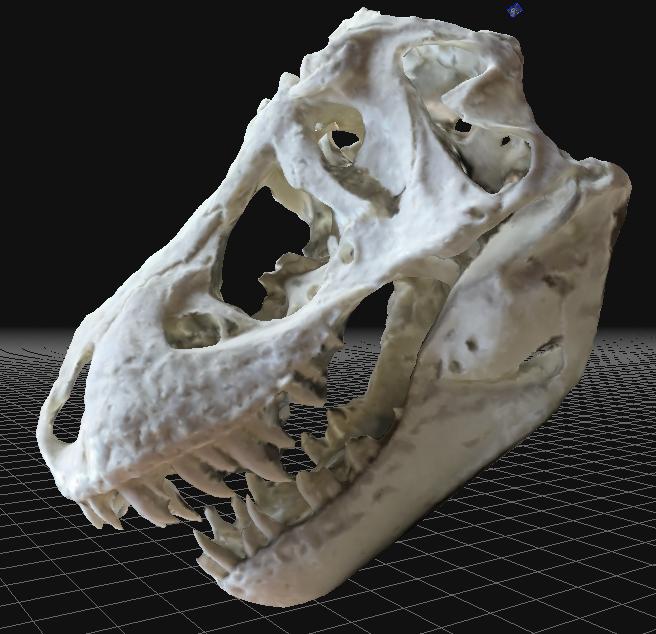 Stan skull.png