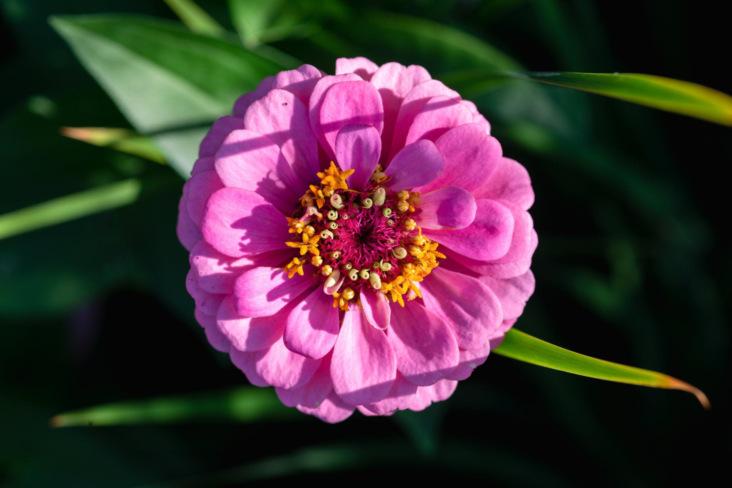 macro flower 123 - 072418 (1 of 1).jpg