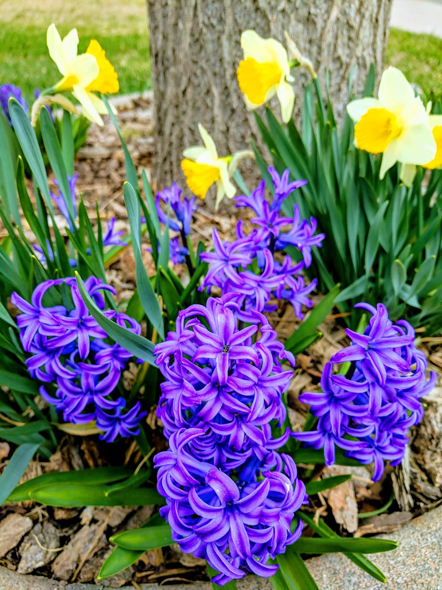 Spring flowers 4.9.19.jpg