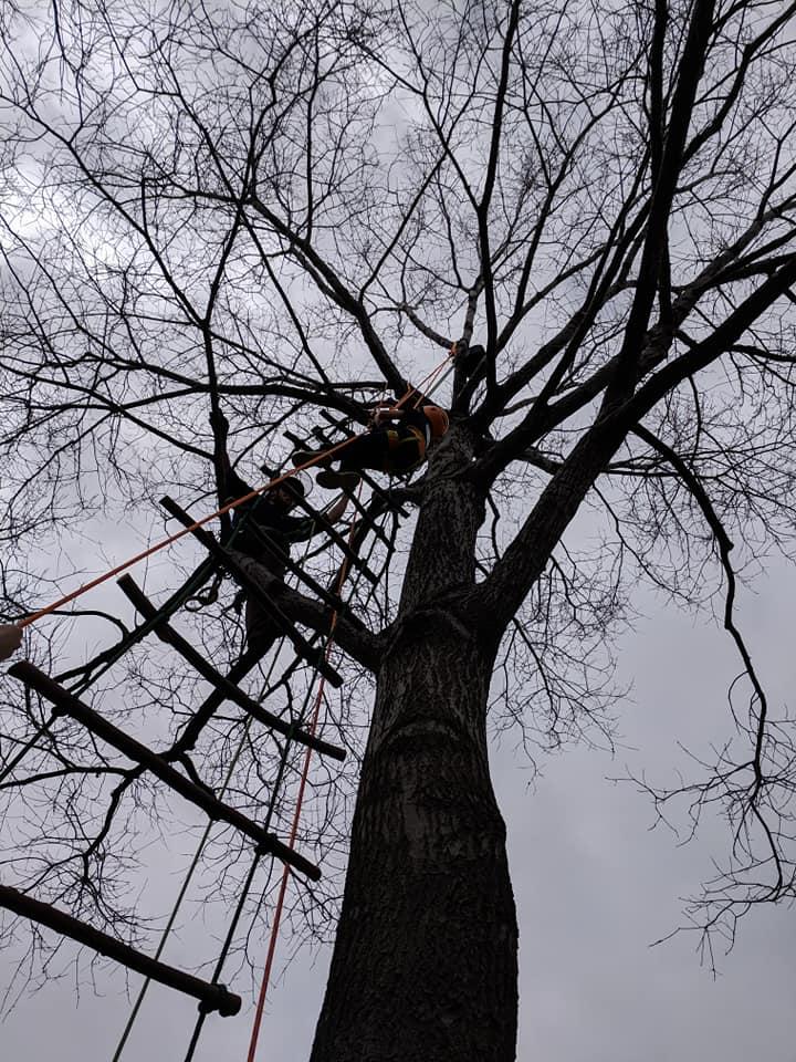 FB Arbor Day 4.20.19 (6).jpg