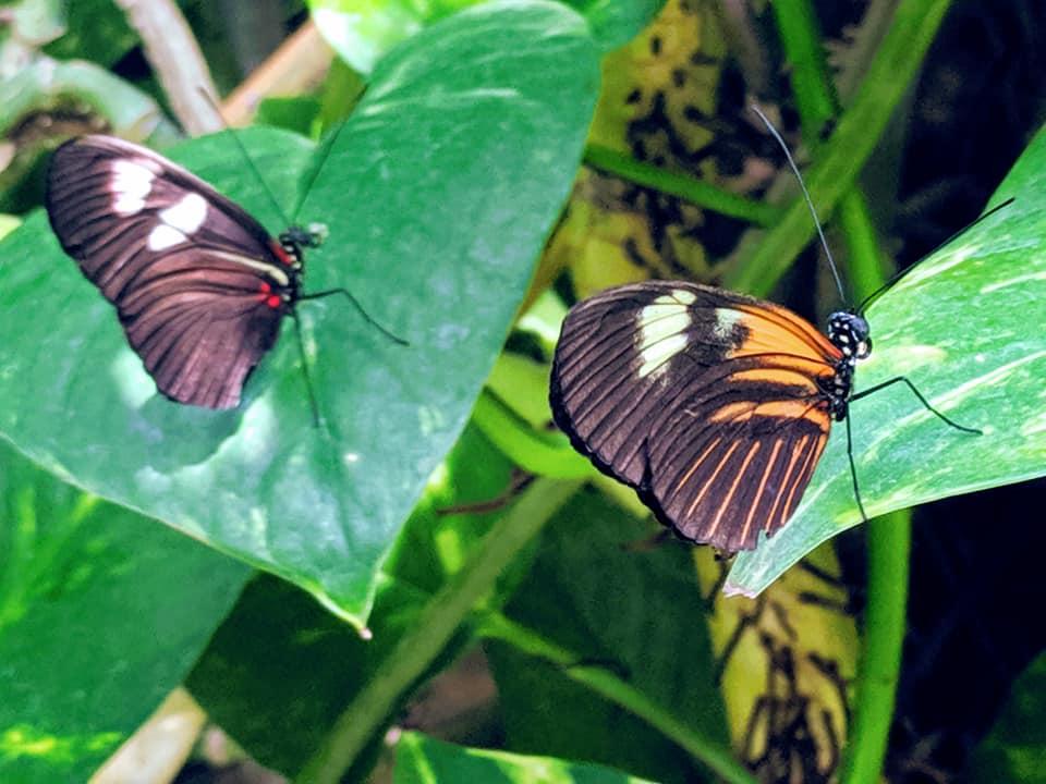 Butterfly Pavillion 5.13.19 (2).jpg