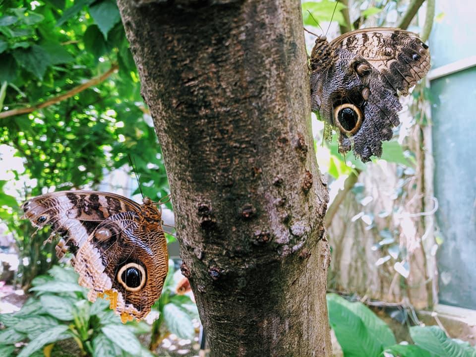 Butterfly Pavillion 5.13.19 (3).jpg