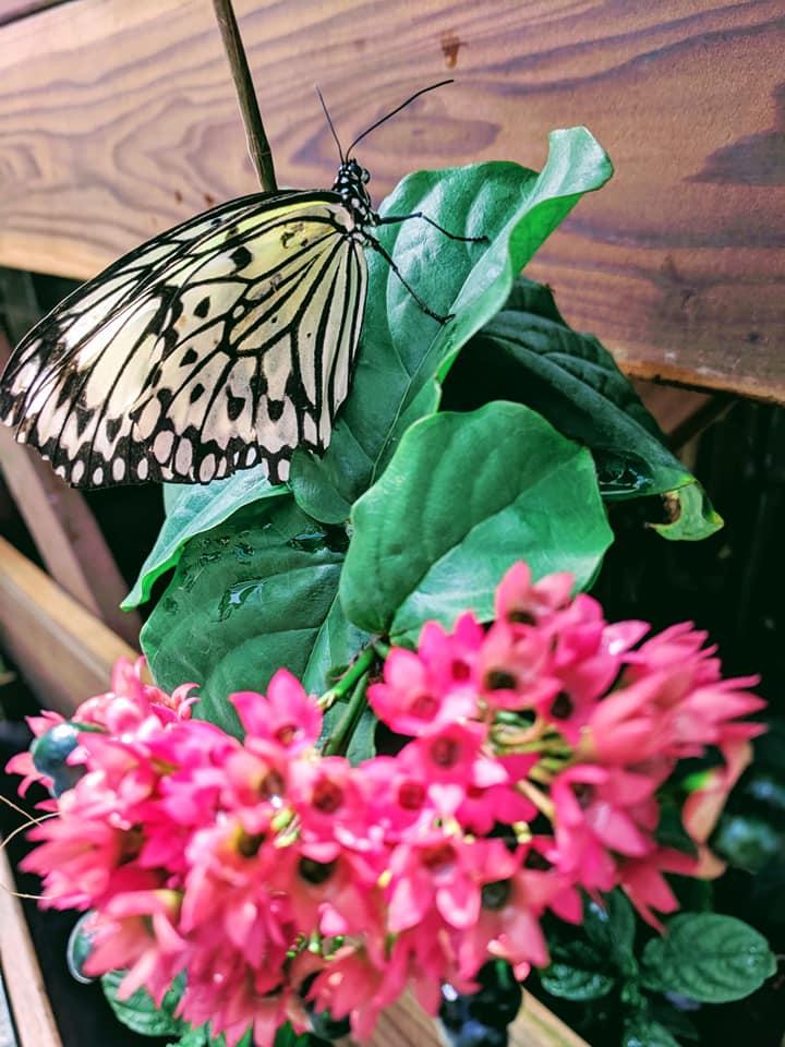 Butterfly Pavillion 5.13.19 (1).jpg