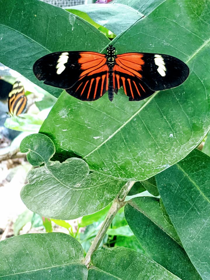 Butterfly Pavillion 5.13.19 (7.jpg