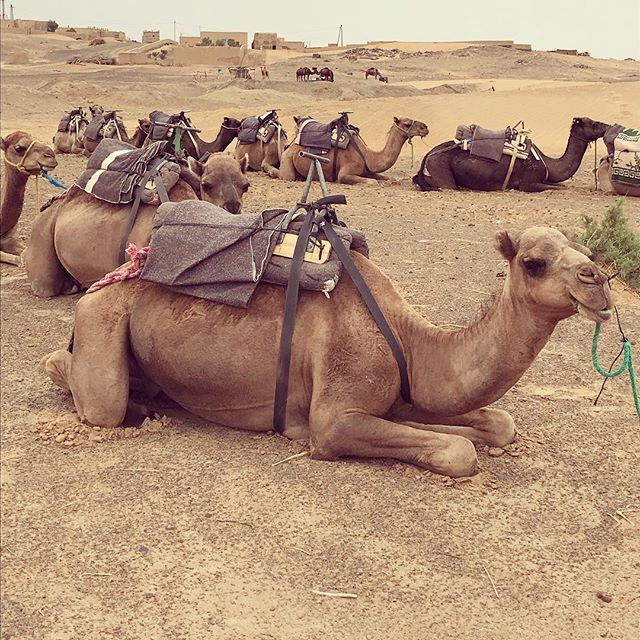 Happy hump day! 🐪🐫 This picture was taken in Morocco in September. Nothing clears my mind and makes me feel more alive than traveling the world with my closest friends! 💫😊🌎 #wanderlust #travel #Morocco #lifecoach #explore #adventure #camel #humpday