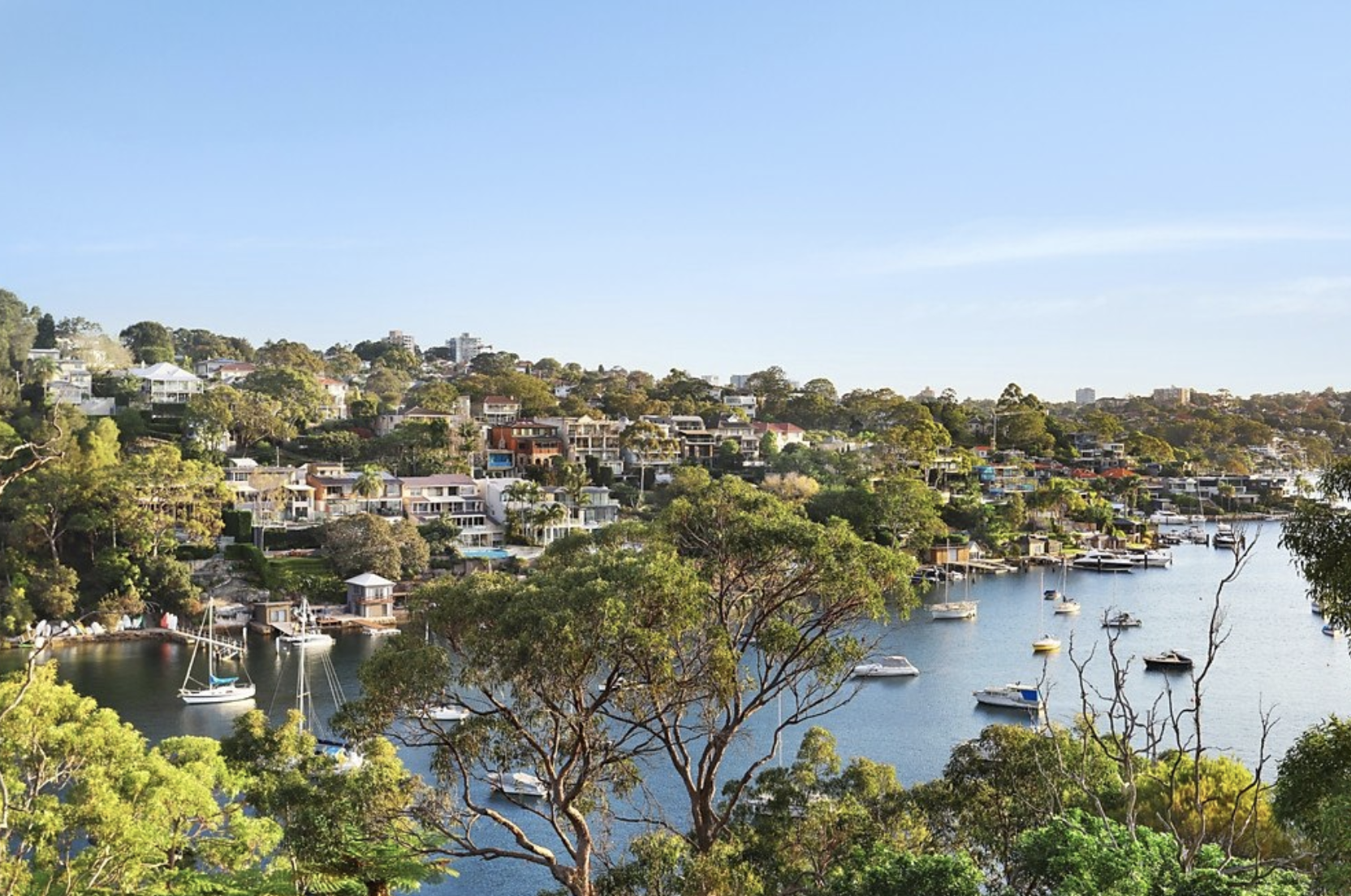 The worst act of tree vandalism in a decade has occurred in the Quakers Bay area of Mosman.