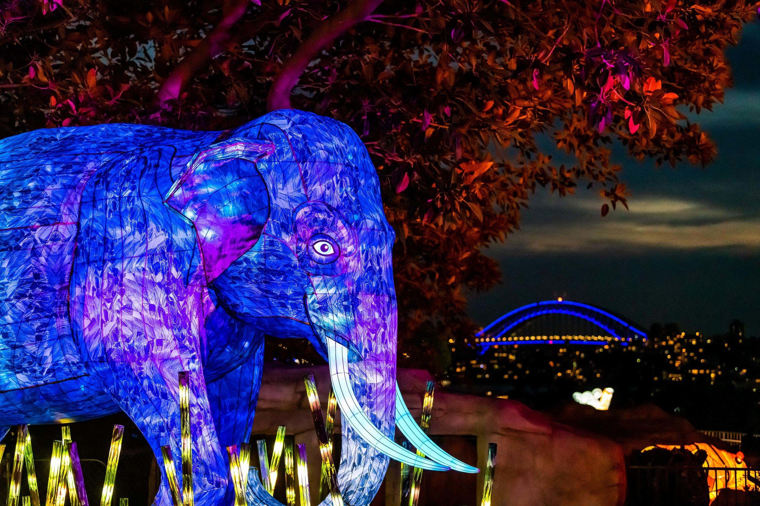 VividSydney2019_TarongaZoo_Elephant_CreditDestinationNSW_KM-1798.jpg