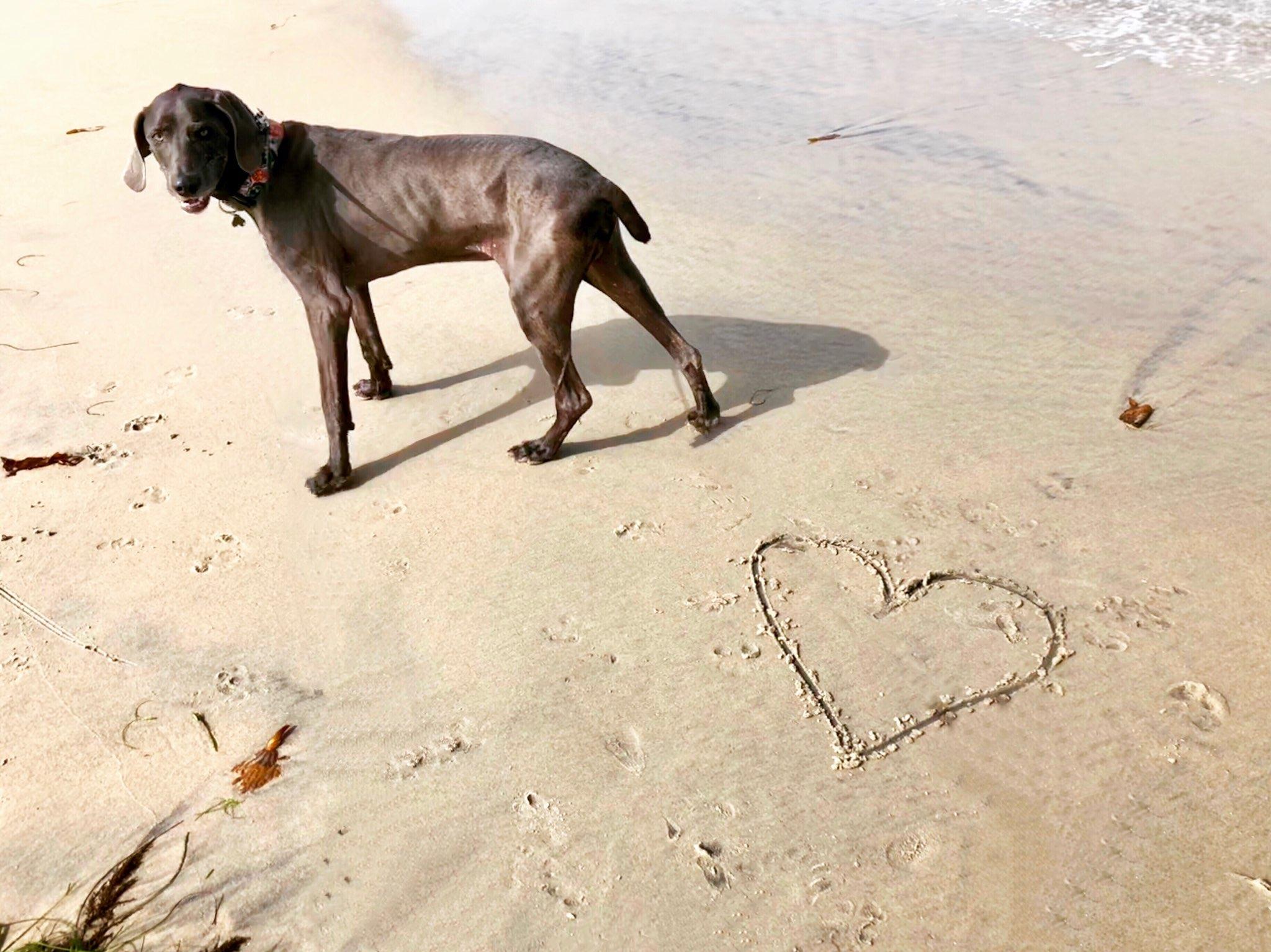 Drake Ocean Beach Happy