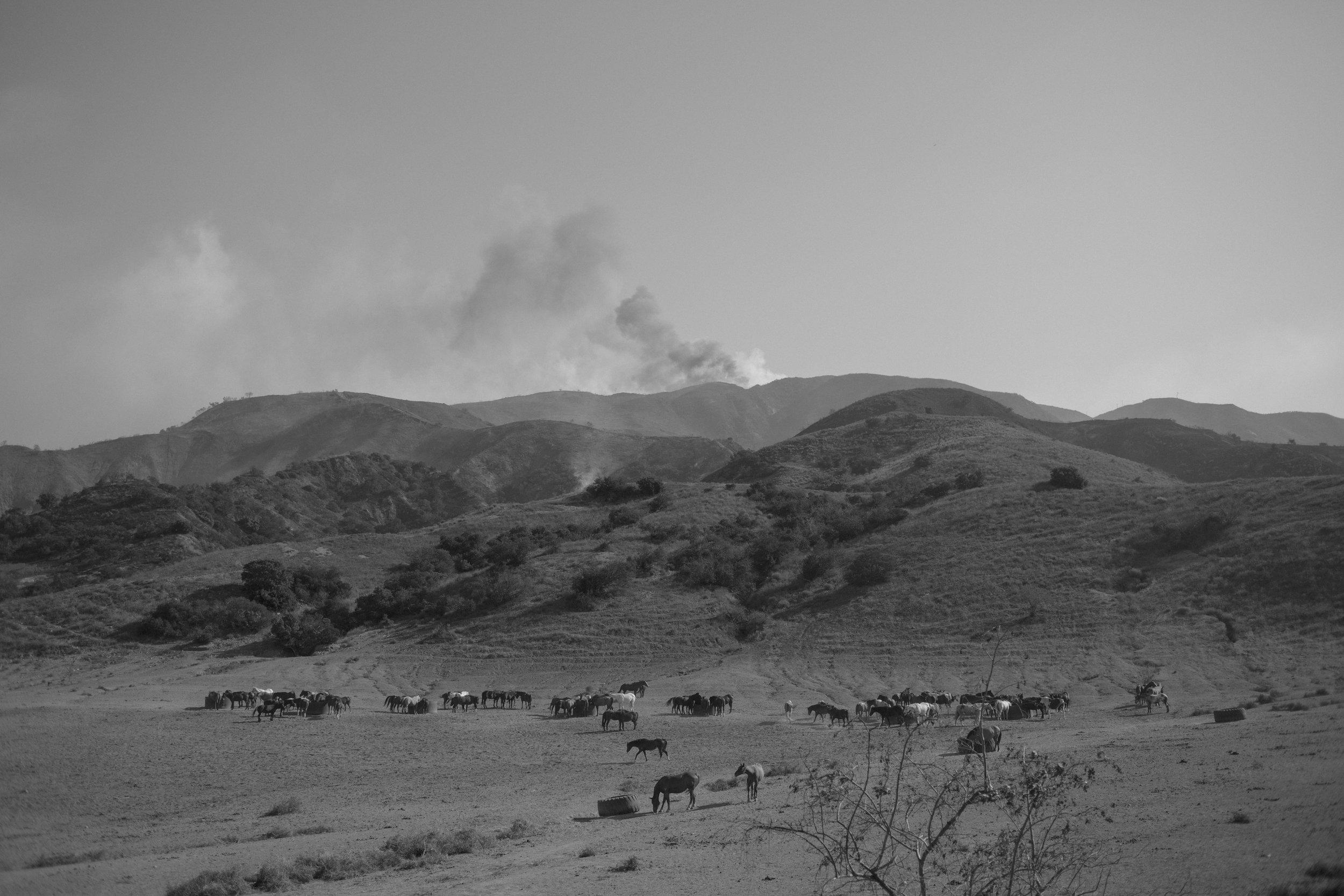 12_KoviKonowiecki_Brush Fire, Corona.jpg