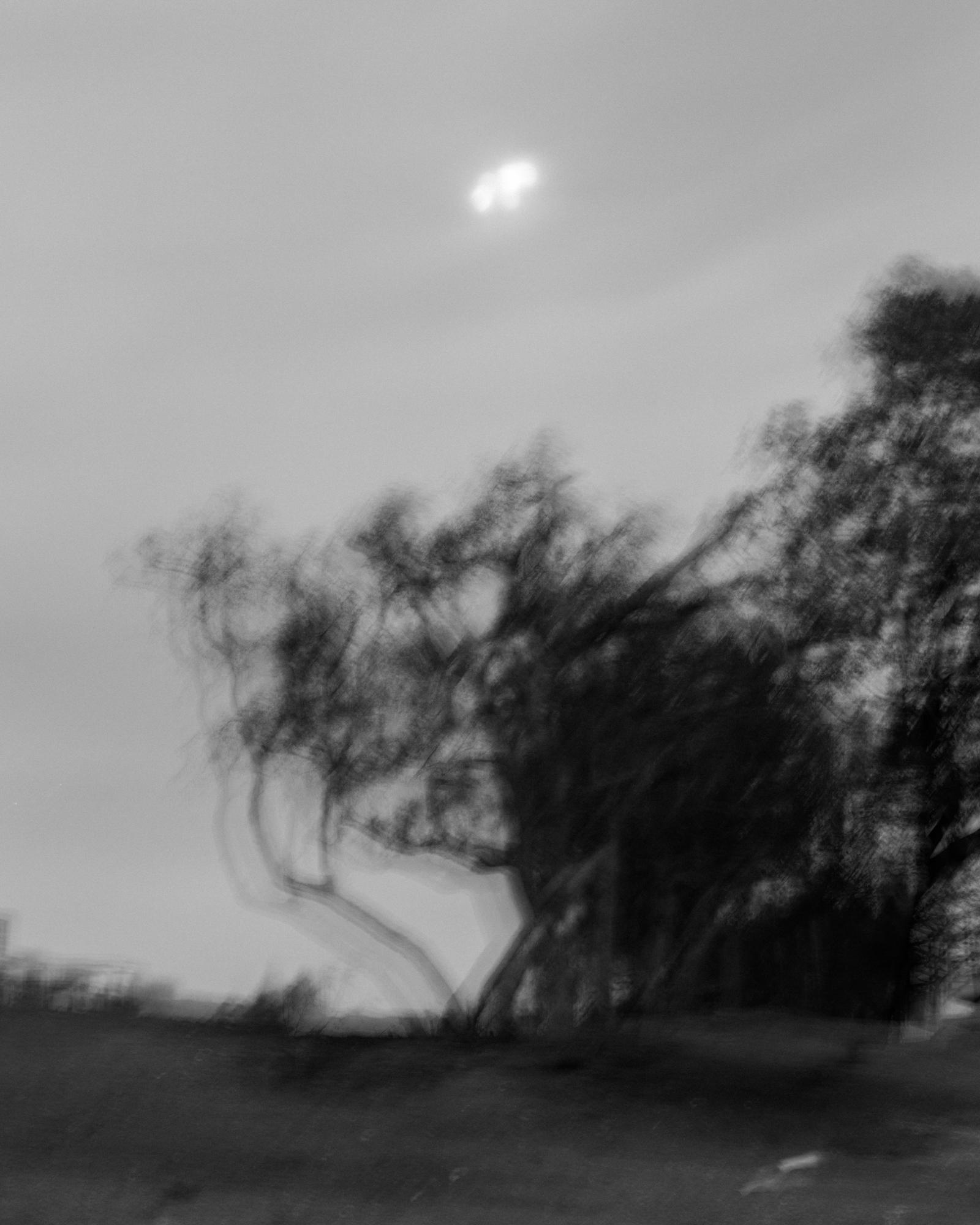 15_Kovi_Driftwood.jpg