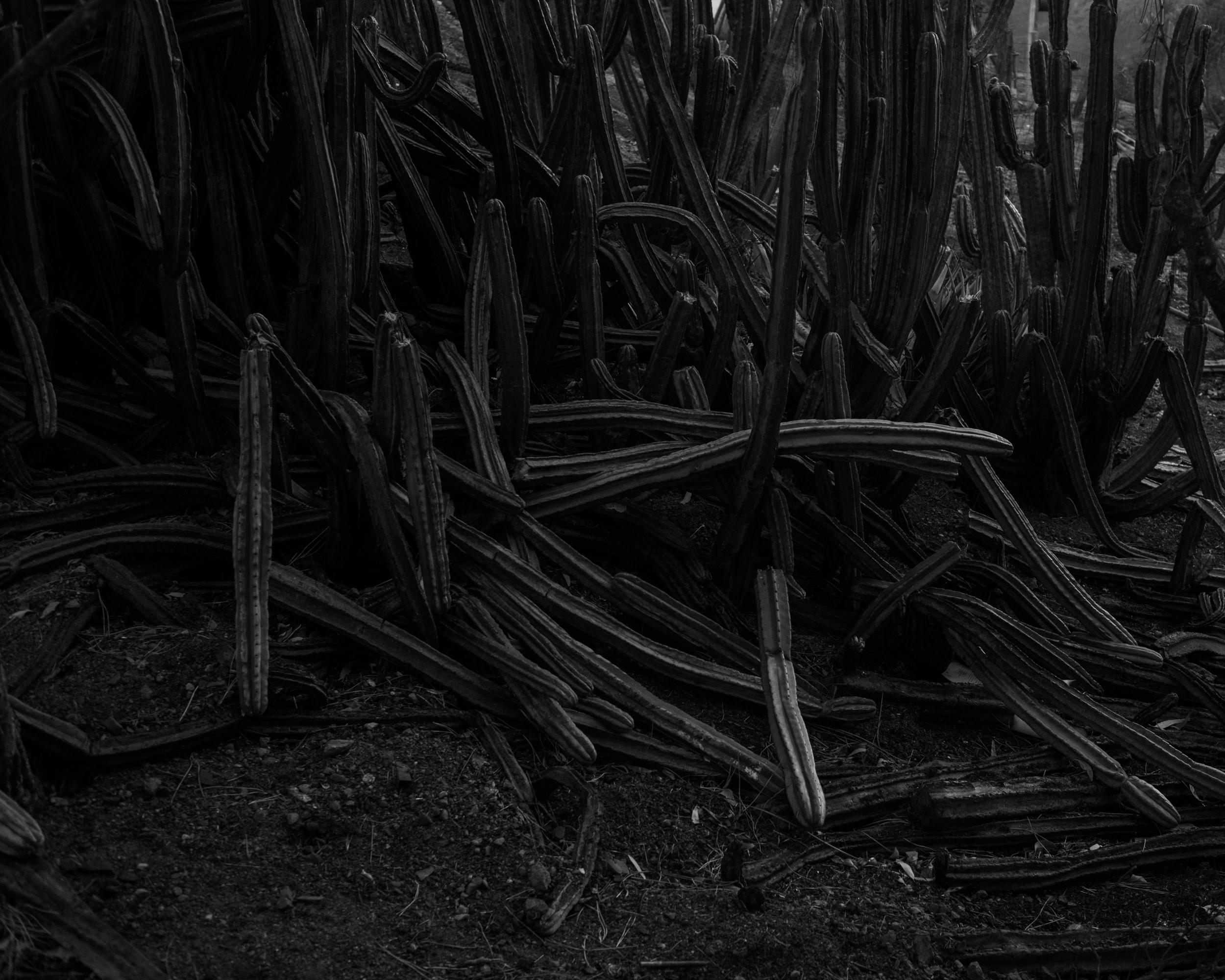 29_Kovi_Driftwood.jpg