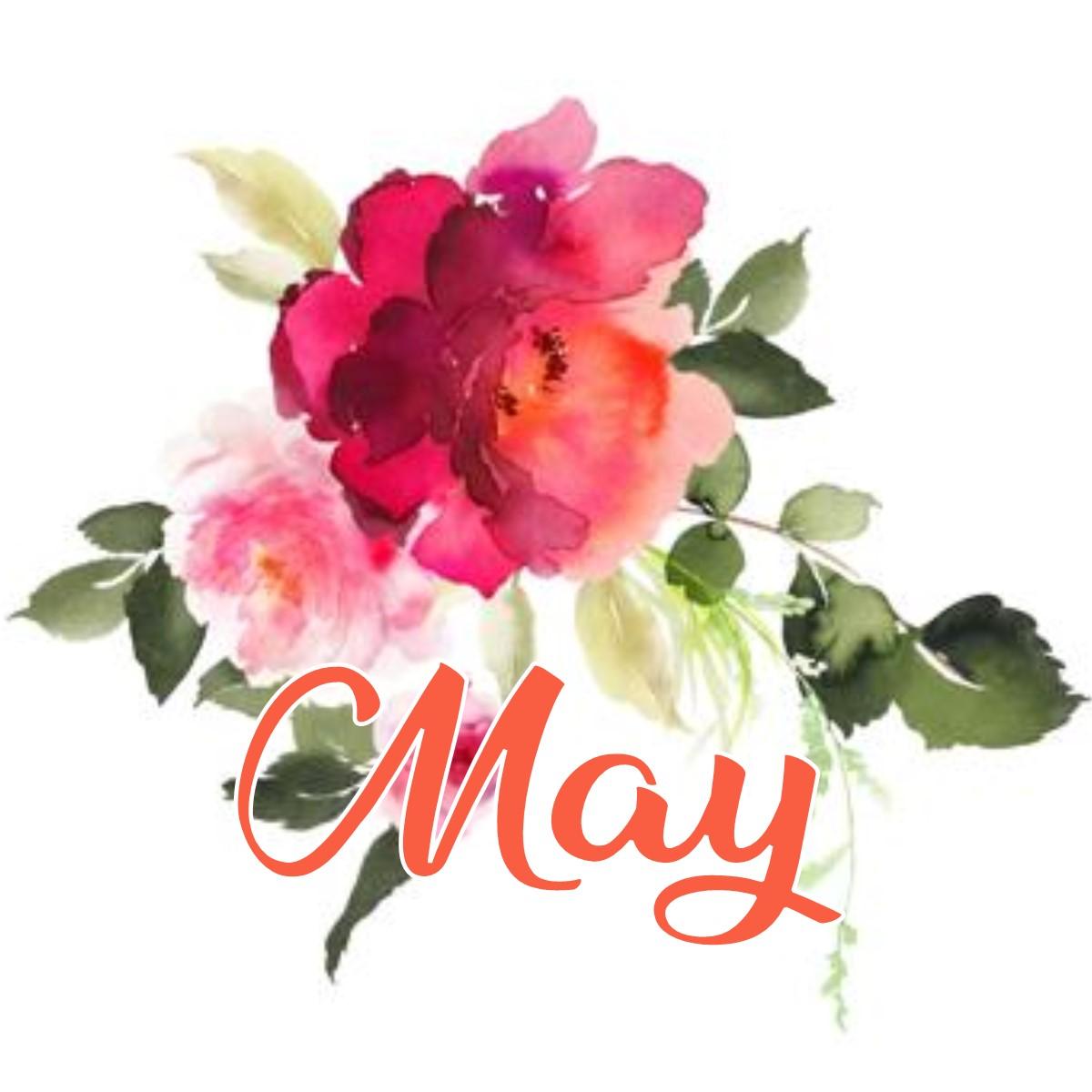 May_Flower.jpg