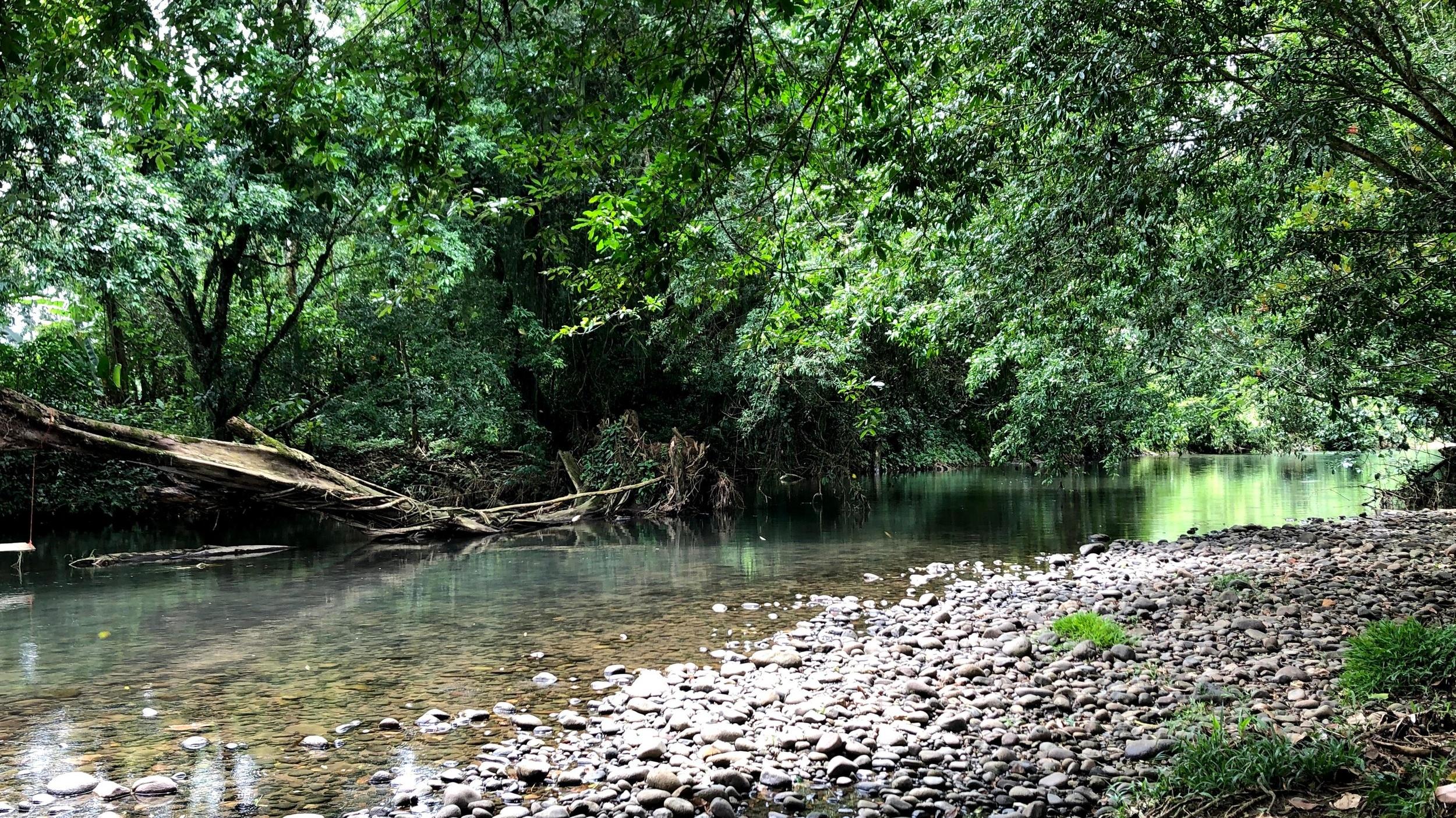 Backyard River - Sanjana Rao