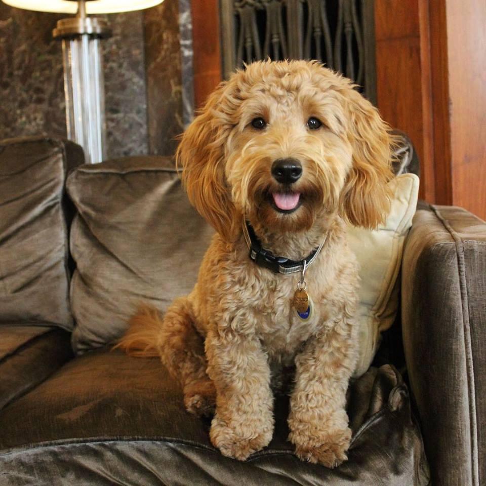 Millie, the #CanineConcierge