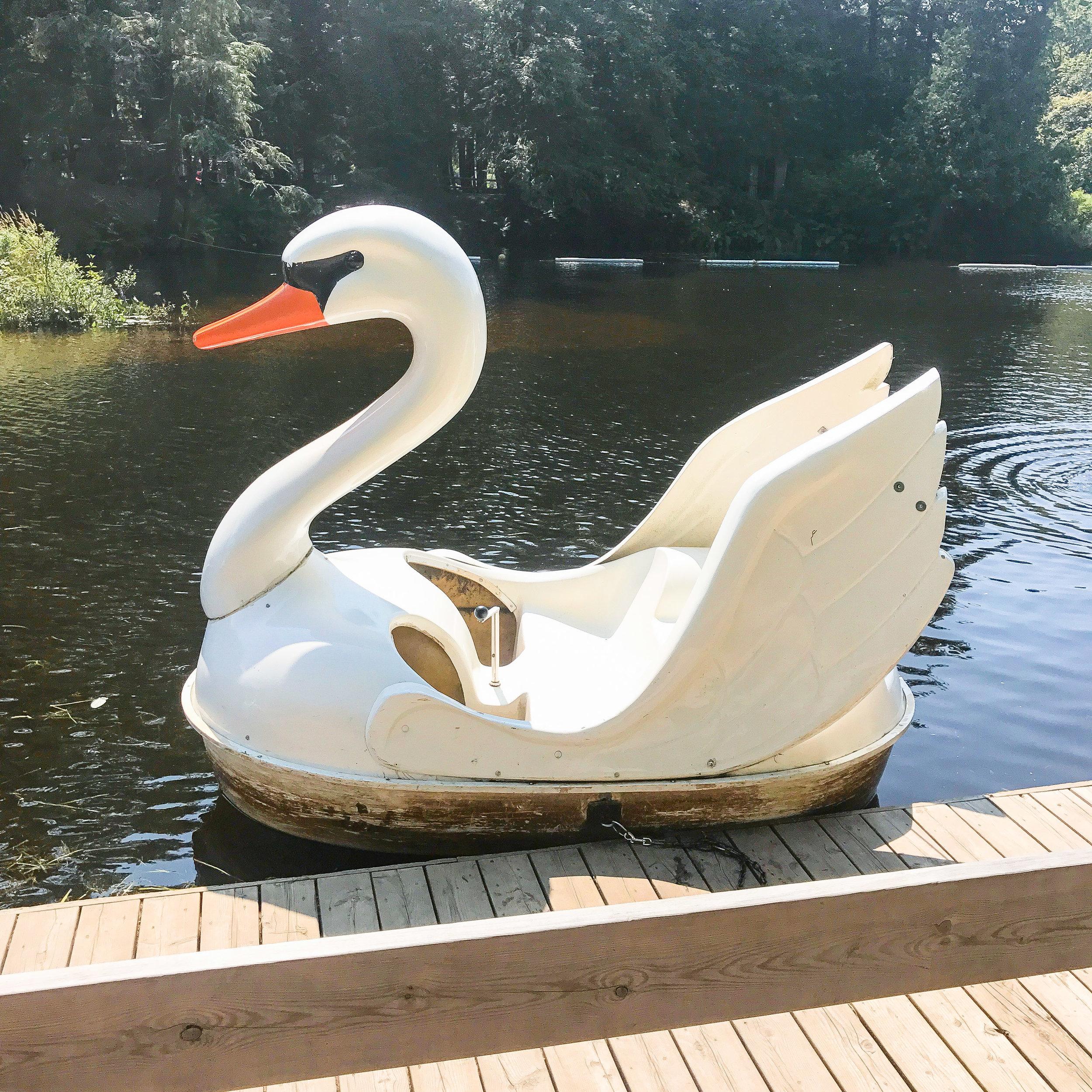 Swan Ride
