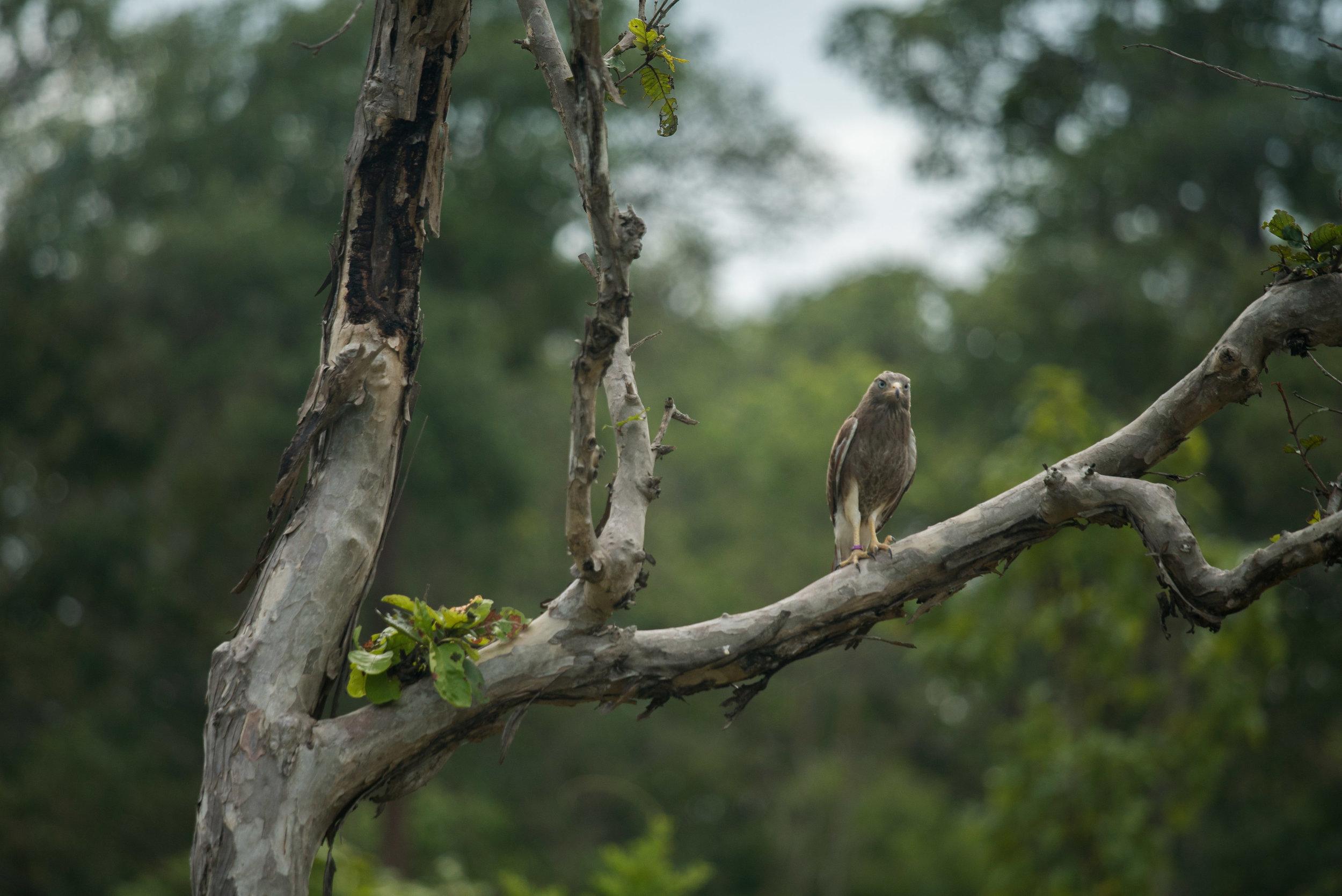 Python & birds release-23.jpg