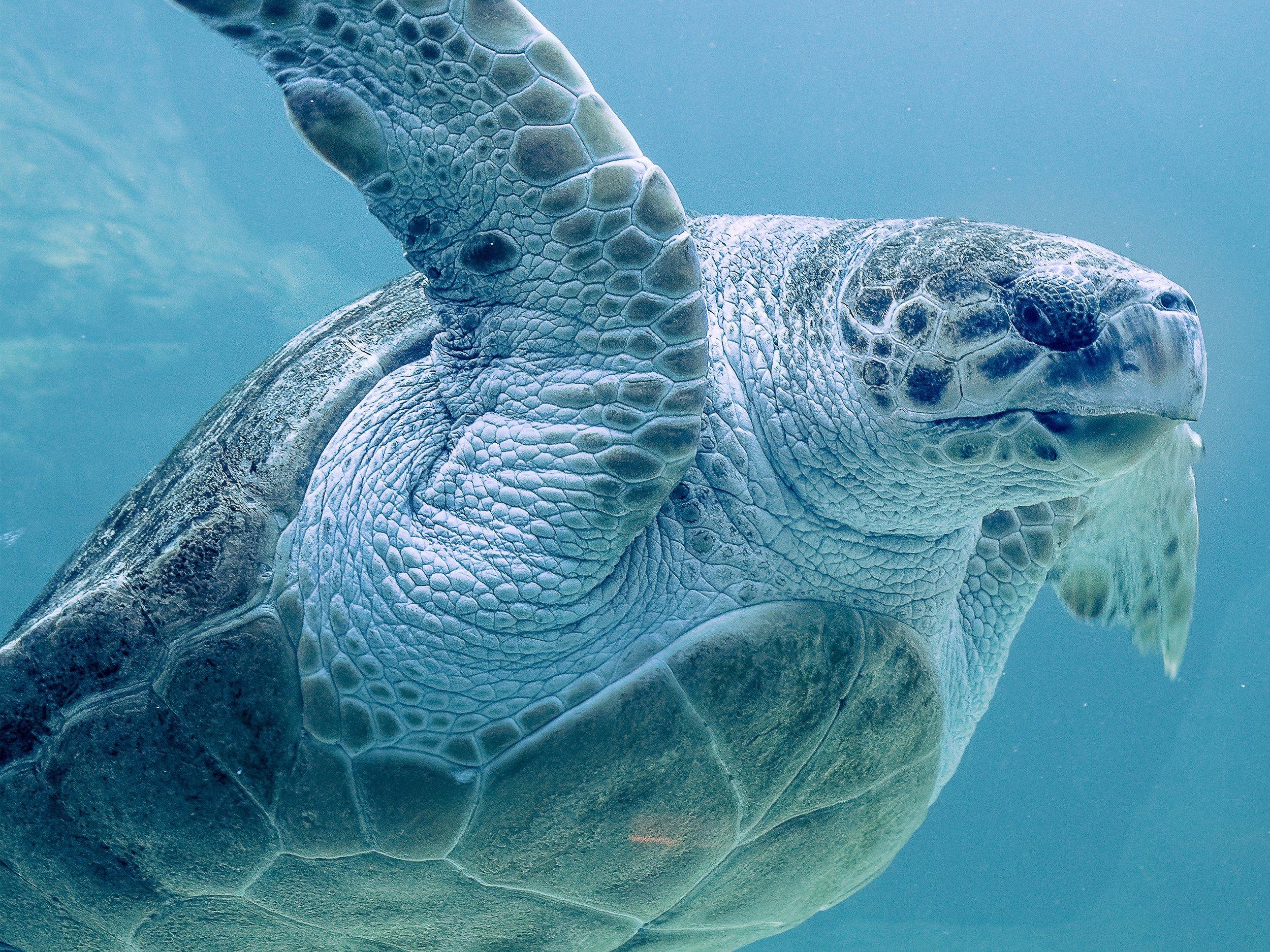 SEa turtle conservancy - Explorer, Photographer & Videographer