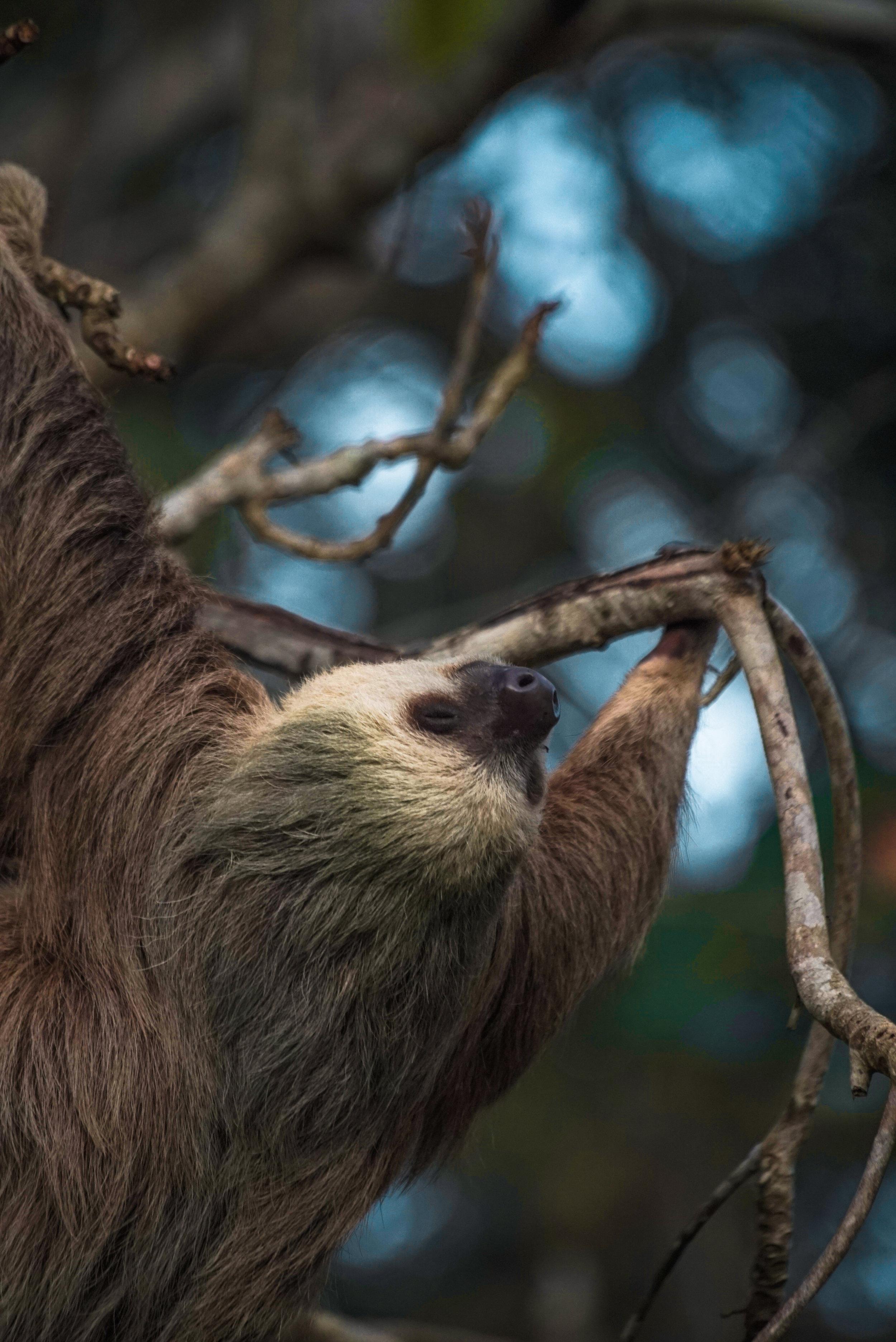 slothcAnnaChah-5.jpg