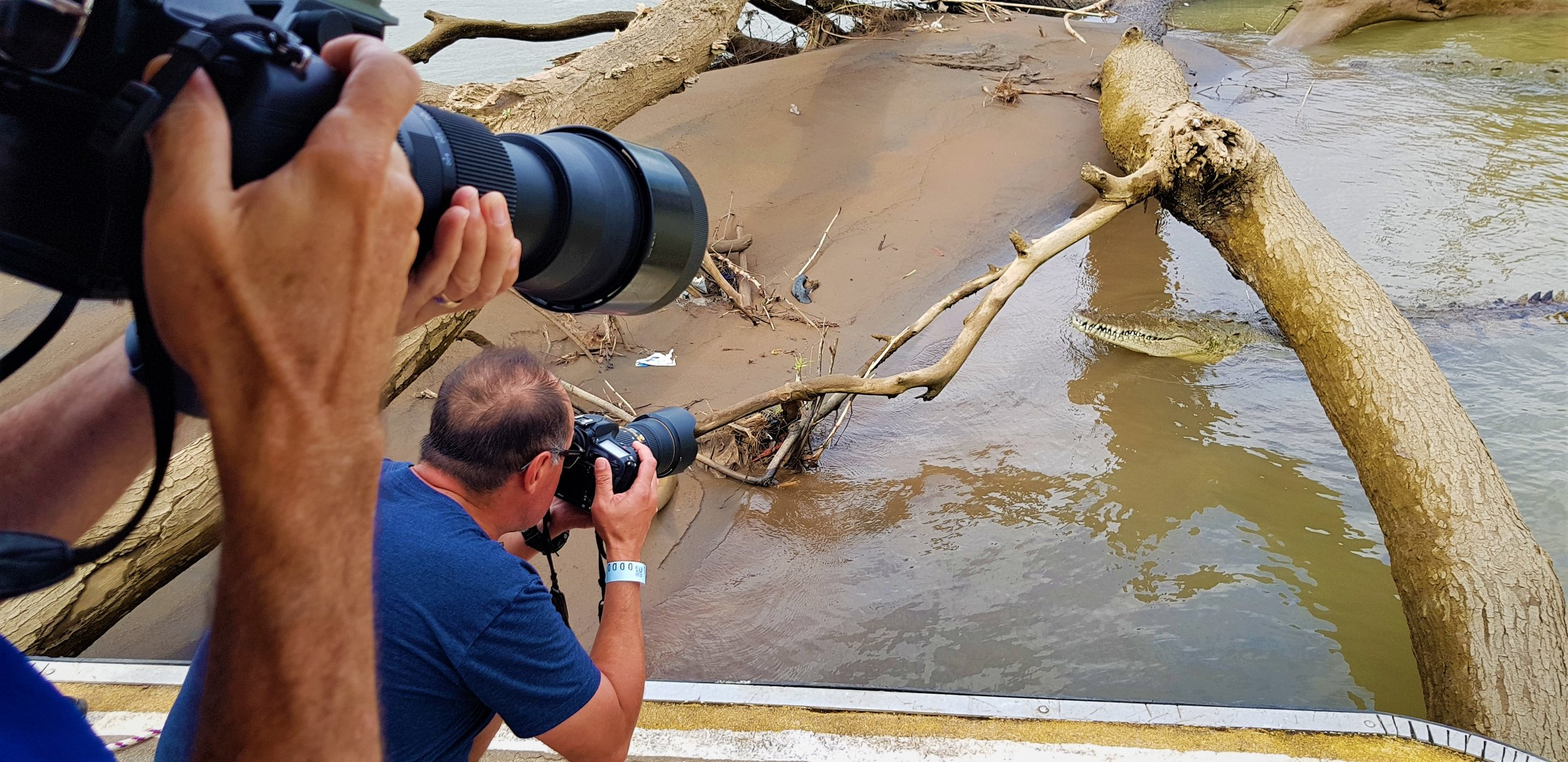Taking photos of the crocs