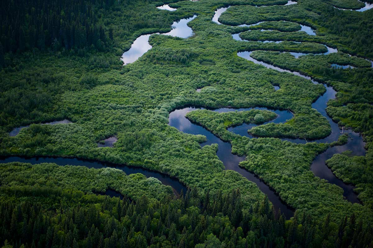Wetland south of Davie Lake. According to GPS coordinates, the proposed Enbridge pipelines would be built less than 0.5 km from this location. British Columbia, Canada. © Neil Ever Osborne