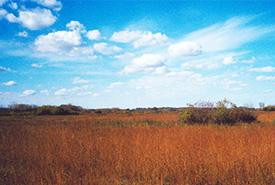 Giant hyssop, tall grass prairie, Manitoba (Photo by NCC)