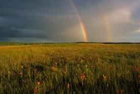 Saskatoon Prairie Natural Area, Saskatchewan (Photo by Branimir Ghetvaj)