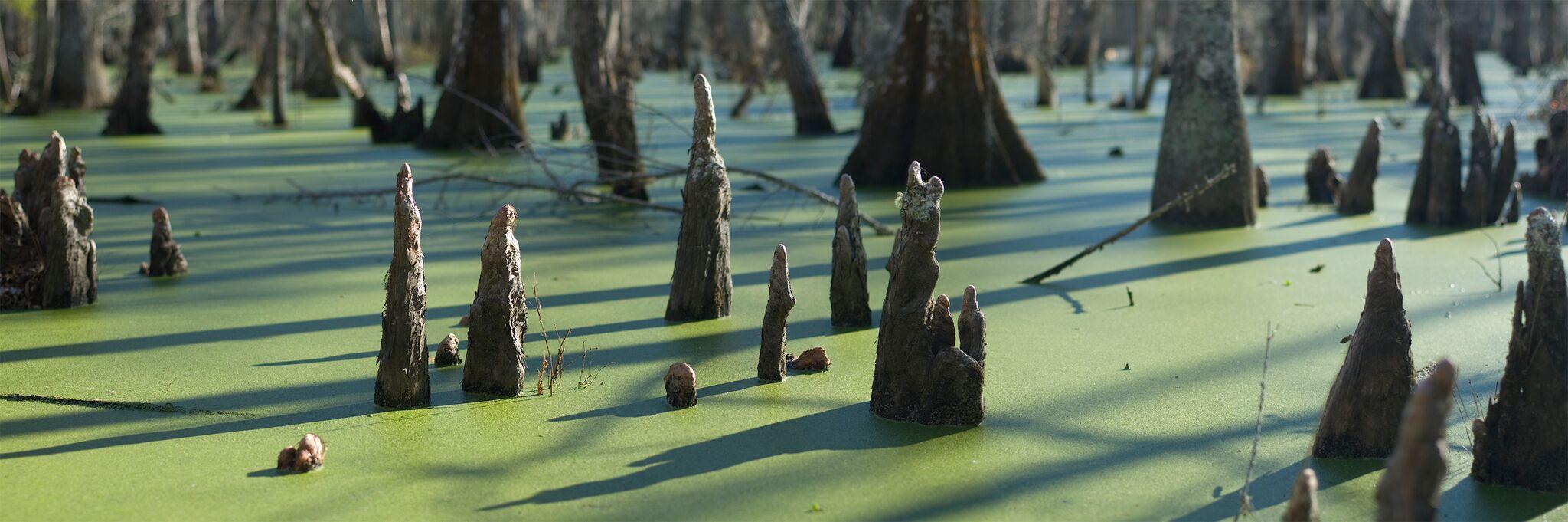 Dungannon Swamp #42541