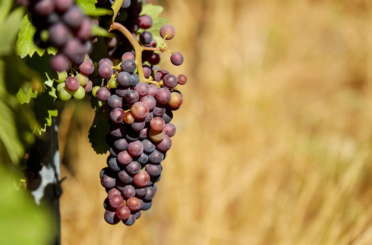 grapes-1612835_1280.jpg
