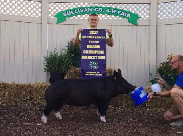 Grand Gilt |Sullivan County Fair 2017