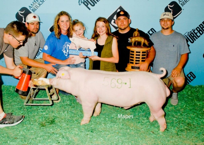 """Grand Champion Chester Boar – 2017 Summer Type Conference 