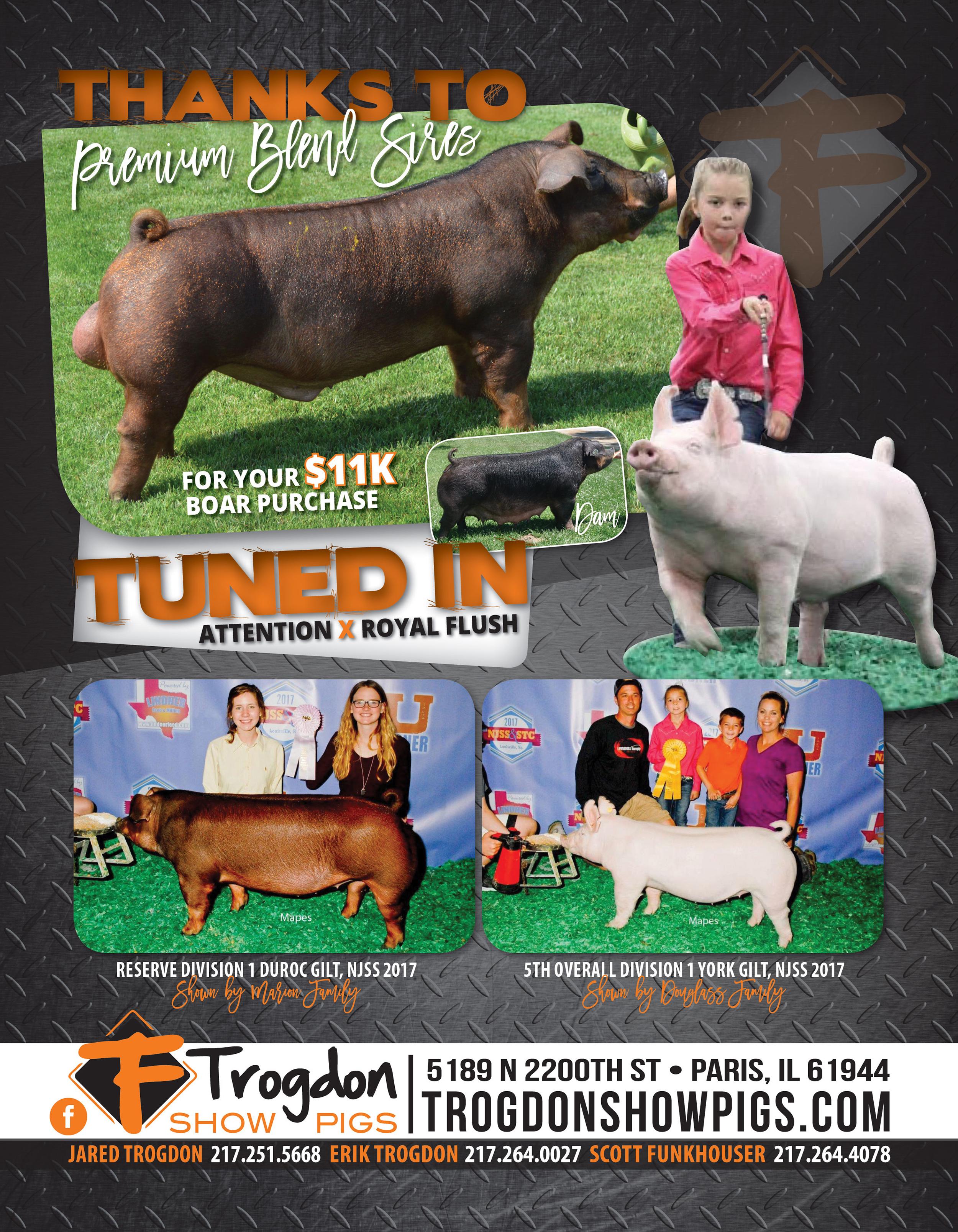 Trogdon-Show-Pigs_Su17_TunedIn-Ad.jpg
