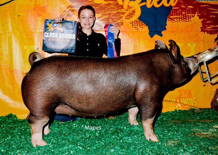Class Winner,Illinois-Bred | Illinois State Fair 2017
