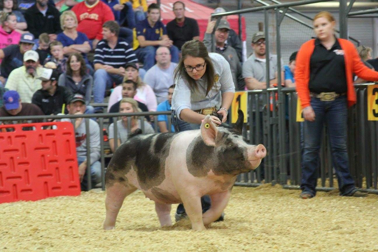 Trogdon-Show-Pigs_Oct2034147.jpg