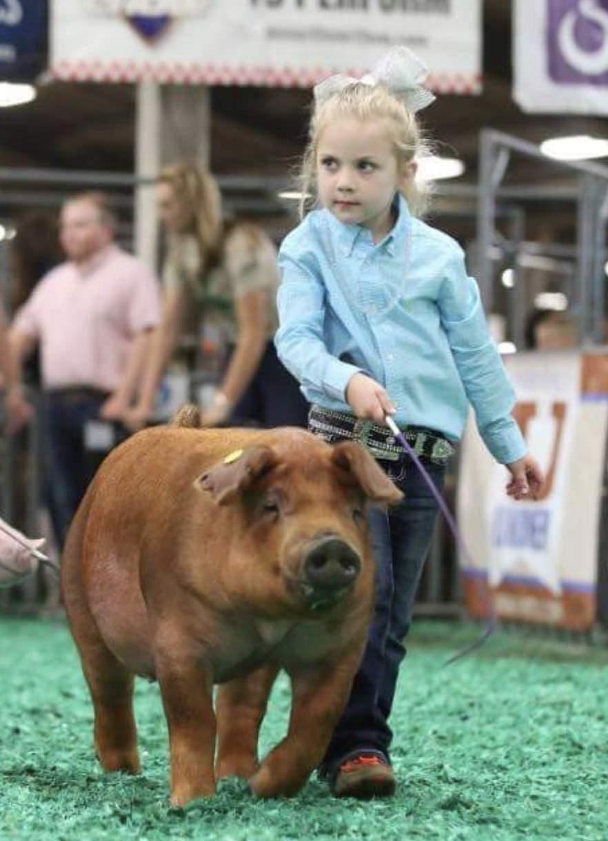 Trogdon-Show-Pigs_poppy.jpg