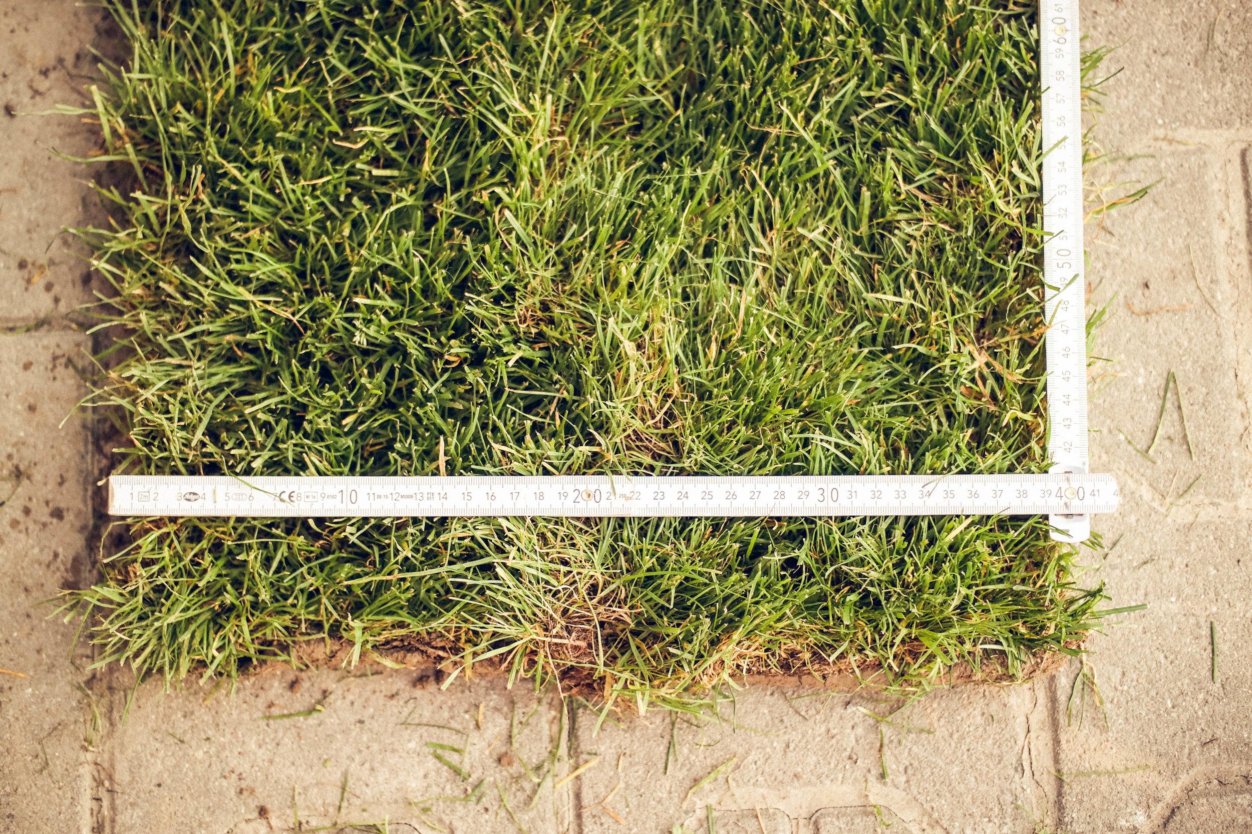 Sorte - Unsere Rasensamen bestehen aus den besten Rasensorten, die speziell auf die Beanspruchung für Sport, Spiel und Garten gezüchtet werden – ein strapazierfähiger Rasen.