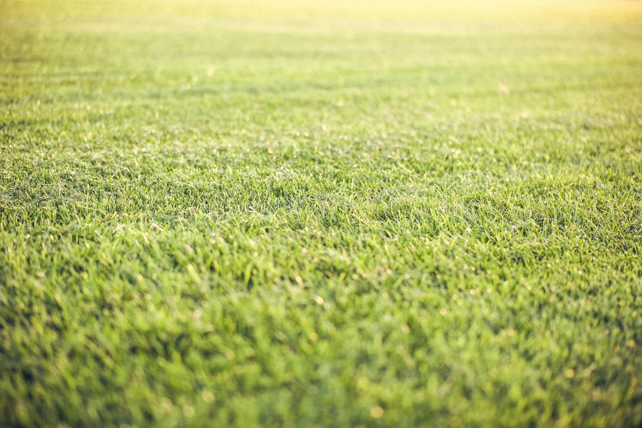 Aufzucht - In unserer Rasenschule auf dem Beekmannshof in Essen-Haarzopf kultivieren wir eine gleichmäßige Grassnarbe, die auf heimischen Lößlehmböden entsteht und daher später auch in ihrem Garten problemlos anwächst.Der Rasen wird mindestens 12 Monate in unserer Rasenschule gepflegt. Regelmäßiges Mähen und Düngen sorgt für ein gleichmäßiges Wachstum und einen dichten Rasen.